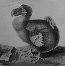 A Dodo
